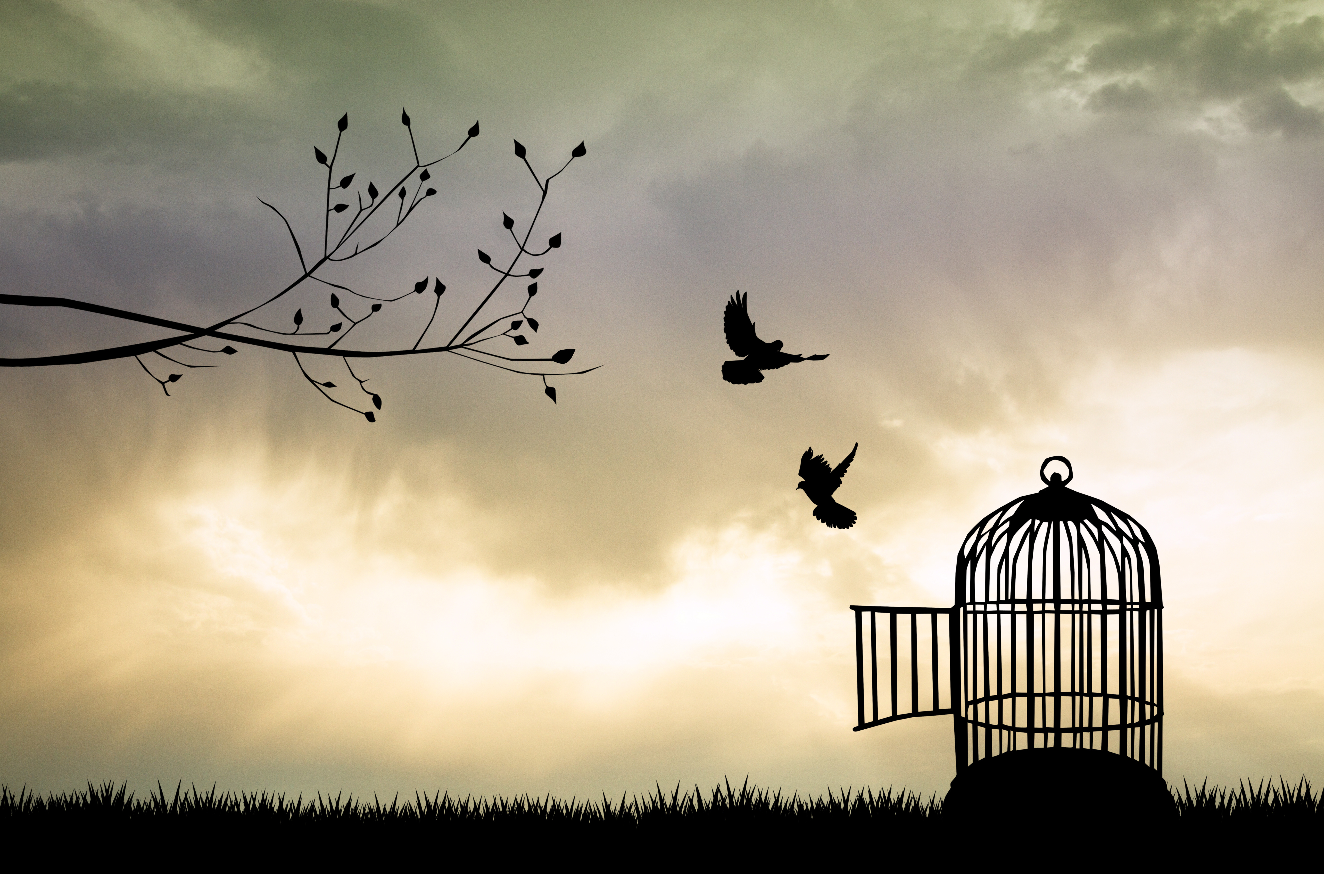 Cage for bird at sunset - Message Magazine